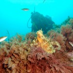 Pourquoi passer le Niveau 1 de plongée subaquatique ?