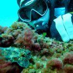 plonger du bord et le secret de l'ile de Gaby à Marseille