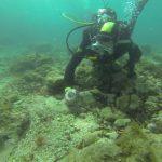 L'algue filamenteuse en Méditerranée