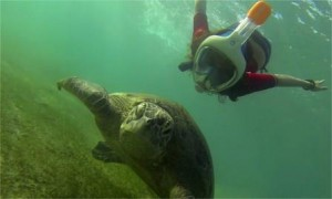 snorkeling easybreath