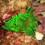 Les Aquanautes association pour découvrir le monde marin