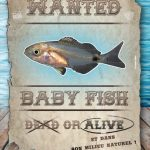 Concours photo Wanted Baby Fish