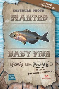 concours Wanted Baby Fish