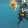 Sur la vie de ma mer les meduses