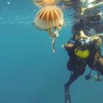 Sur la vie de ma mer Les Méduses