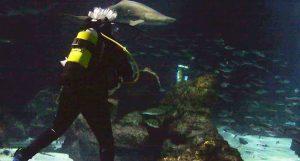 Plonger du bord avec les requins dans l'aquarium de Barcelone