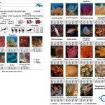 Plongée d'initiation au protocole d'observation du coralligène cigesmed for divers