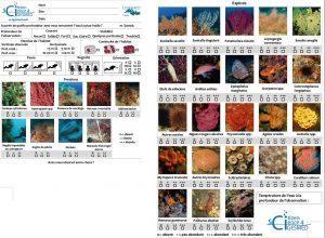 Plongée d'initiation au protocole d'observation du coralligène