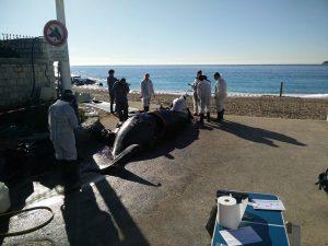 une baleine à cassis