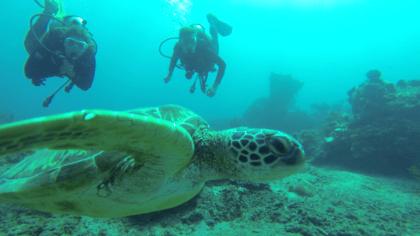 plonger du bord à Bali