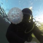 Pourquoi y-a-t-il tellement de méduses dans la mer ?